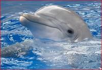 Beynəlxalq Əsir Delfinlər Günü